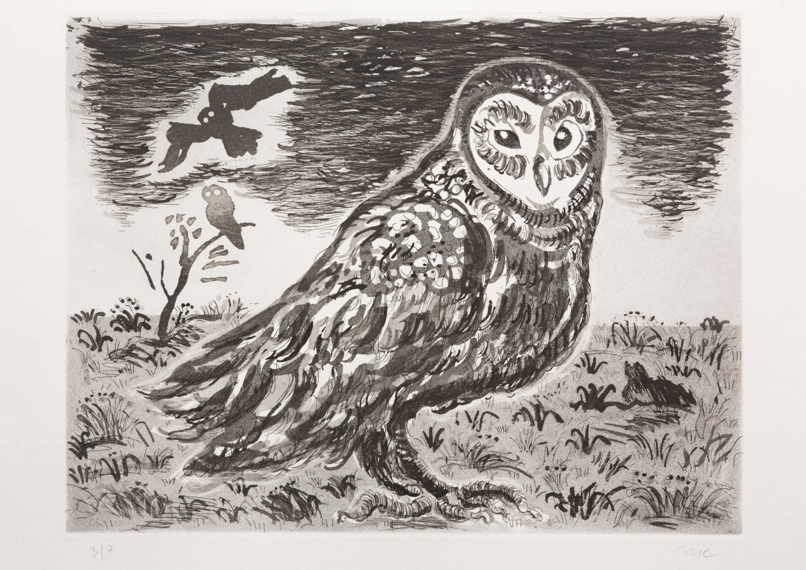 Barn Owl (aquatint)